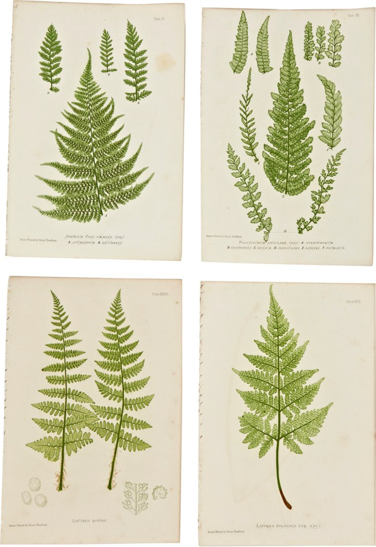 Nature-Printed Ferns IX, Set of 4