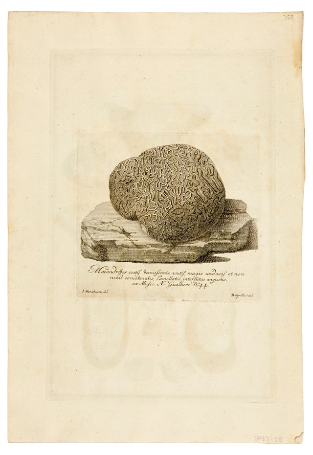 18th-C. Coral Engraving IV