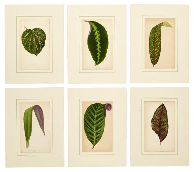 Botanical Prints, Set of 6, I