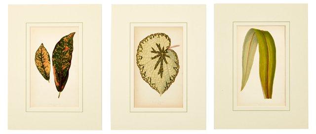 Botanical Prints, Set of 3, II