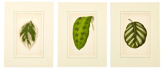 Botanical Prints, Set of 3, VI