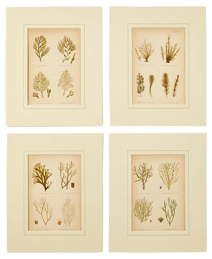 Seaweed Prints, Set of 4, II