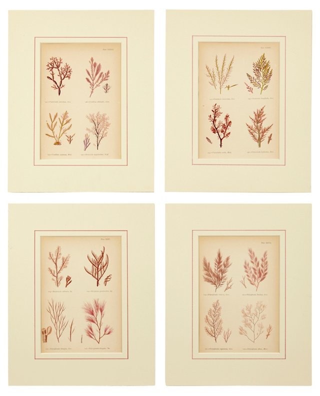 Seaweed Prints, Set of 4, VI