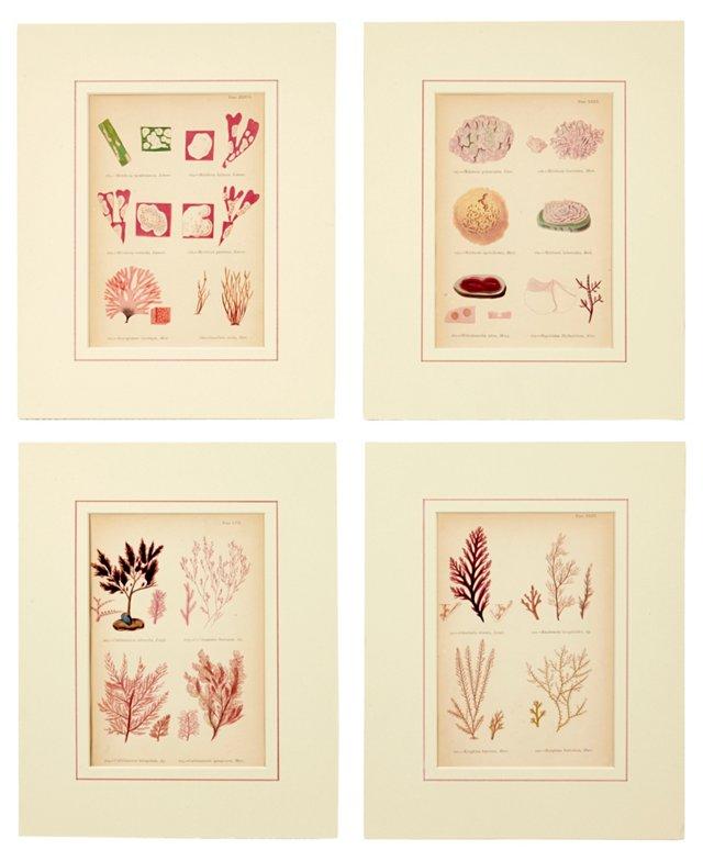 Seaweed Prints, Set of 4, IX