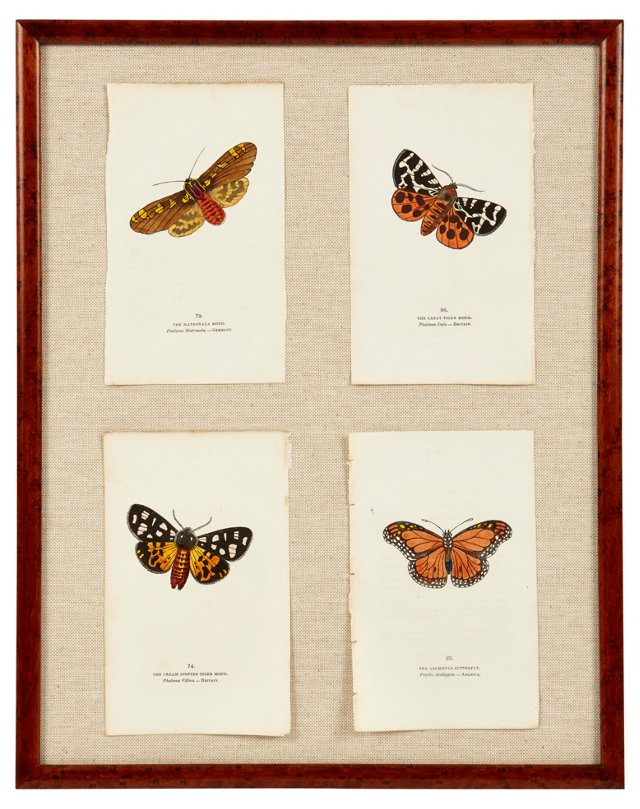 Antique Butterfly Prints, Set of 4