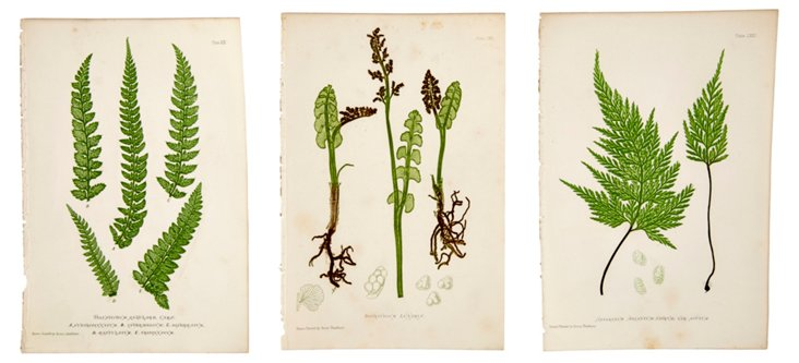 Nature-Printed Fern Prints, Set of 3