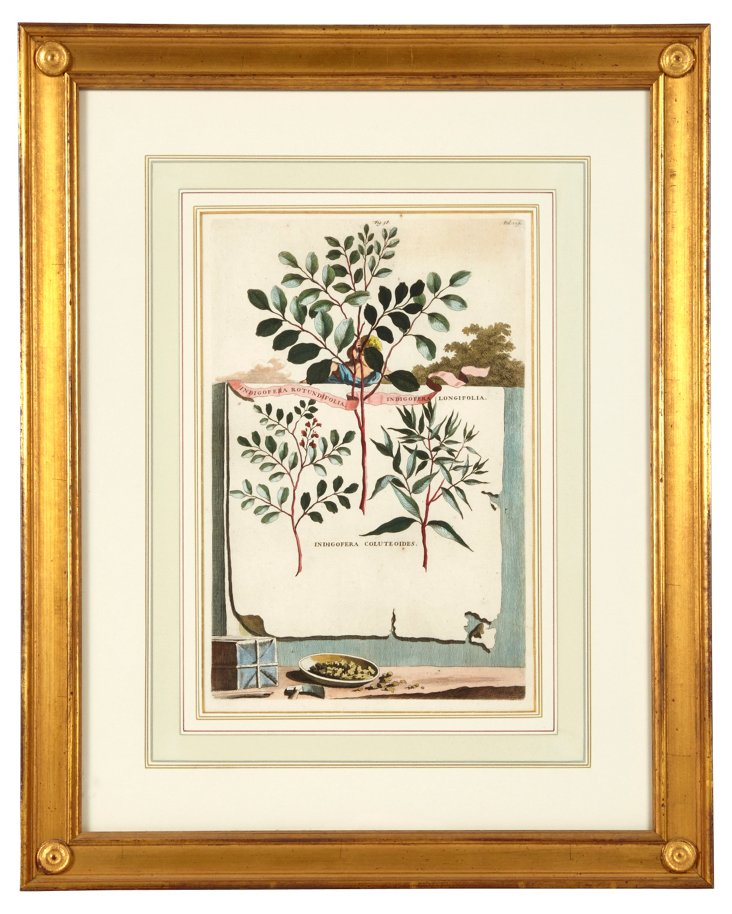Antique Botanical Print