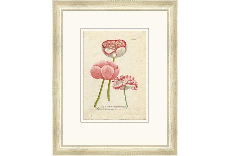 Vintage Pink Botanicals II