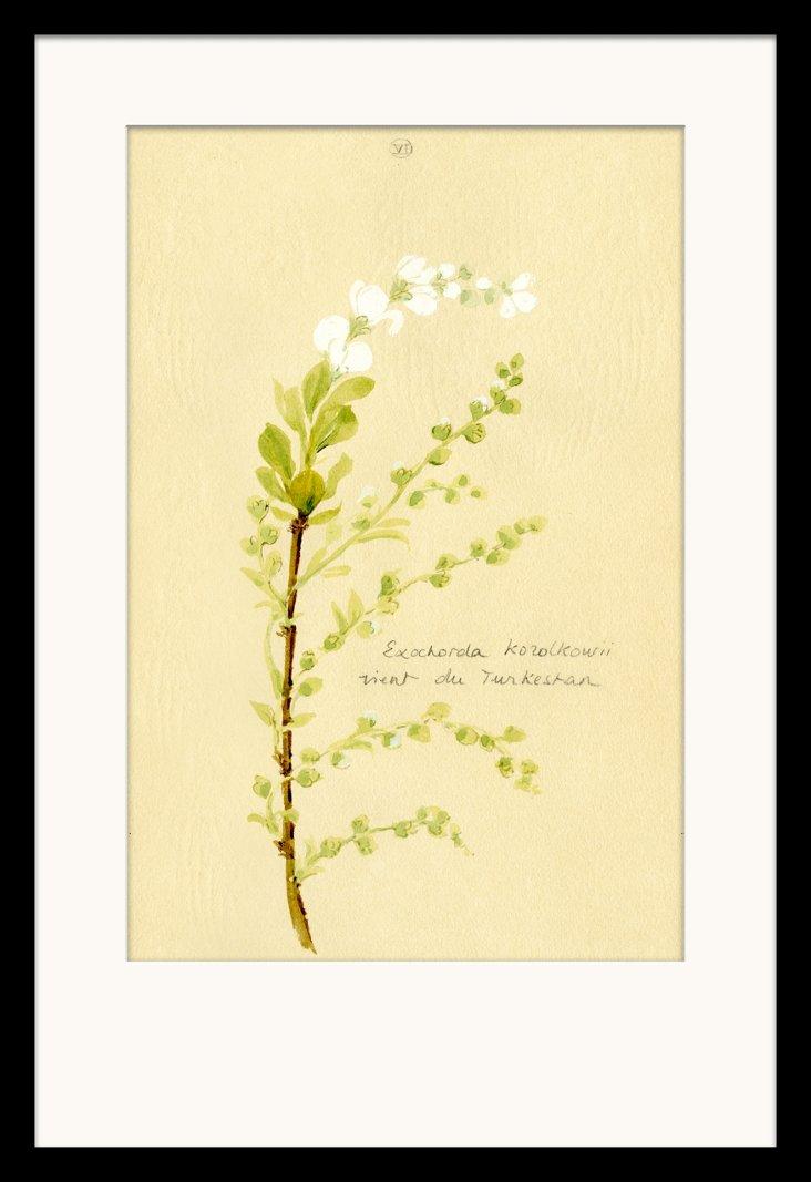 Isabelle de Borchgrave Flower Sketch II