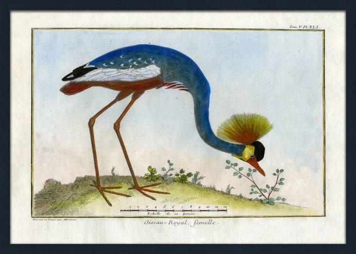 Suzanne Kasler, Exotic Birds