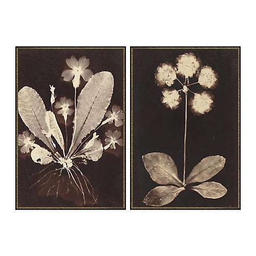 Botanicas Diptych, Soicher Marin