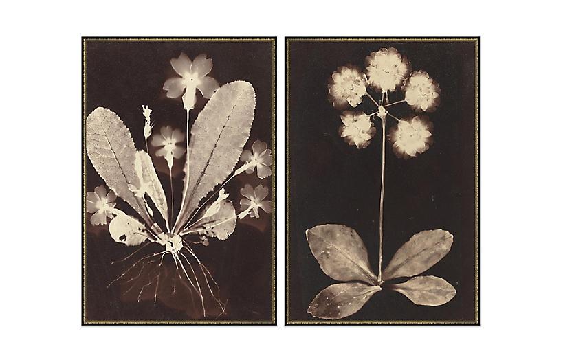 Soicher Marin, Botanicas Diptych
