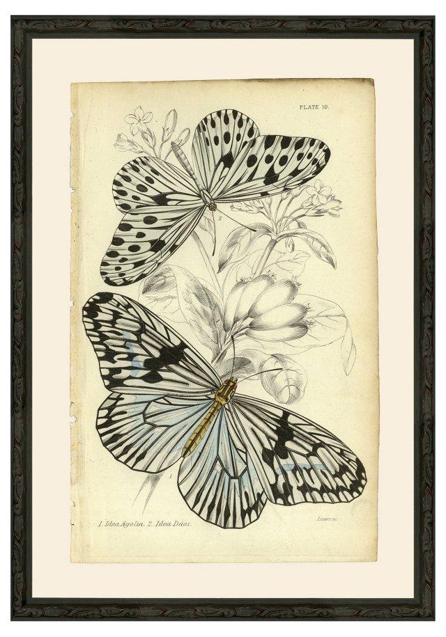 Butterflies 1837 Print