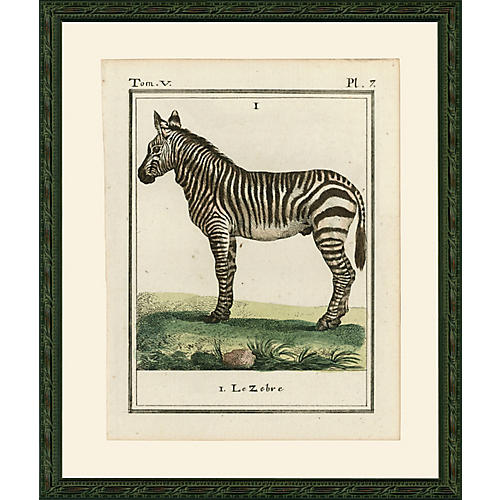 Zebra, 1786