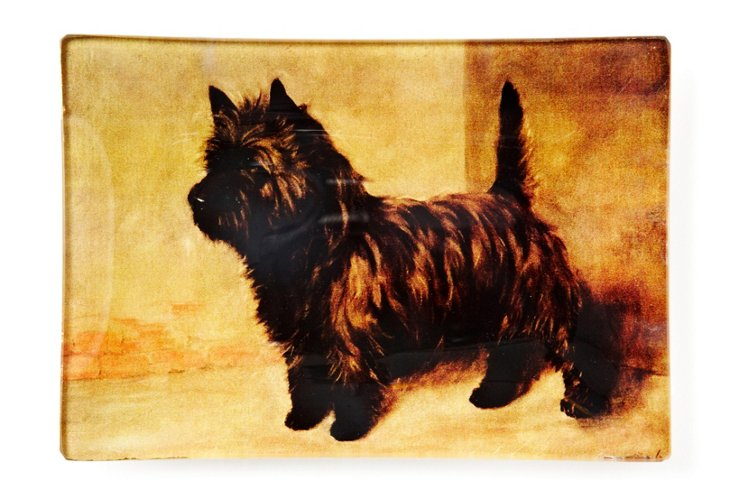 Carin Terrier Tray