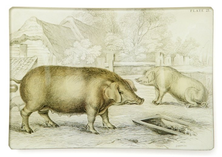 5x7 Pair of Pigs Tray