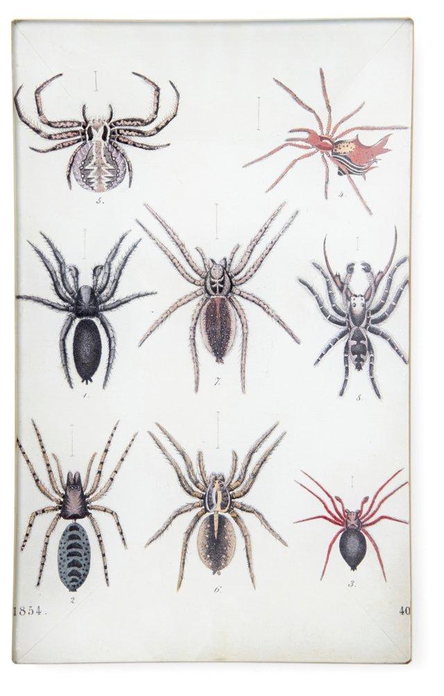 Spider Study Tray