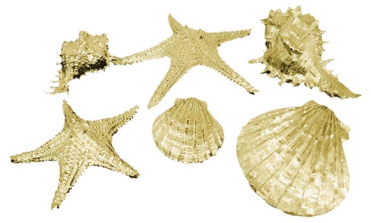 S/6 Gilded Seashells