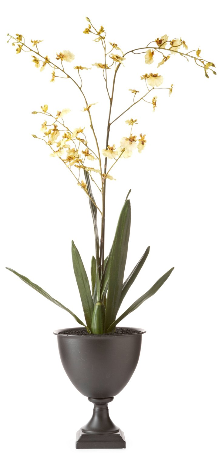 """33"""" Orchid in Planter, Yellow"""