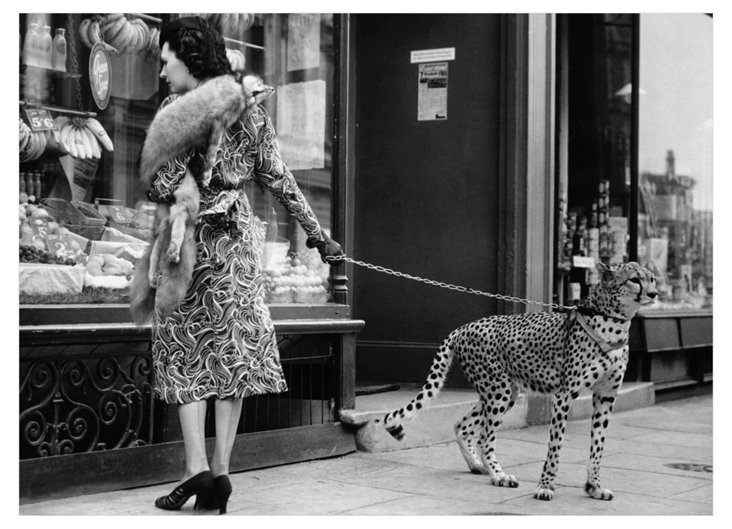 Andy Irvine, Cheetah Who Shops