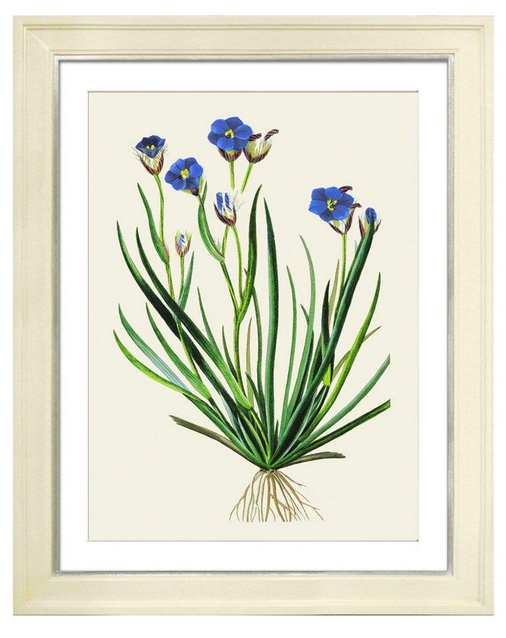 Pancrace Bessa, Flowers I