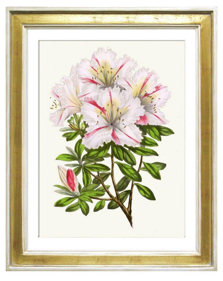 Van Houtte, Flores des Serres 1865