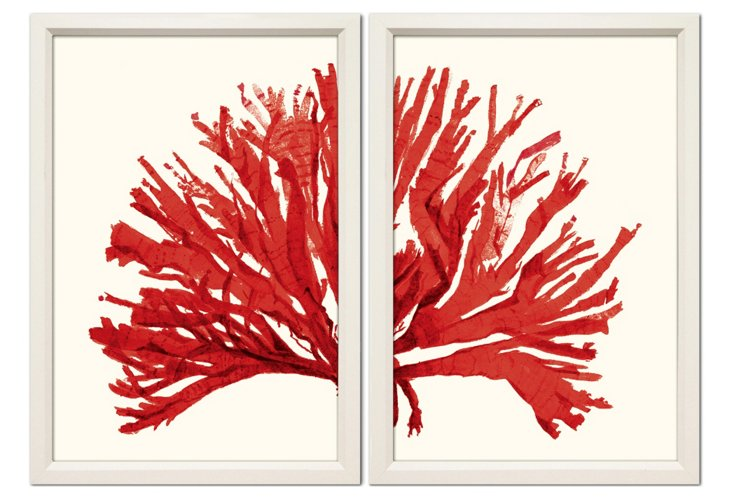 Miranda Baker, Red Coral Diptych