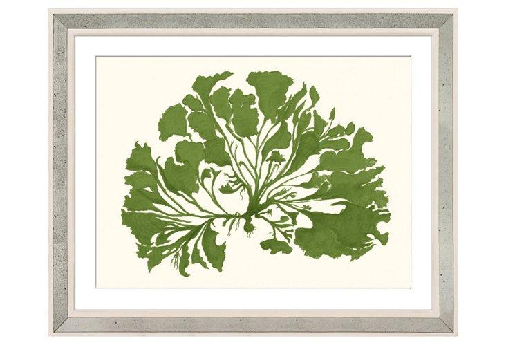 Miranda Baker, Green Coral III
