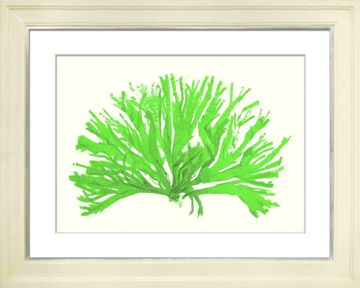 Miranda Baker, Bright Green Coral