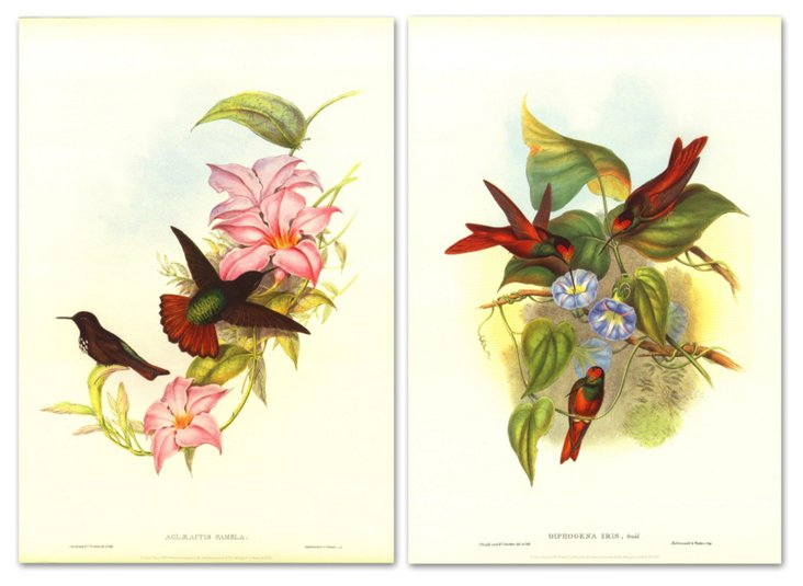 John Gould, Hummingbirds II Diptych