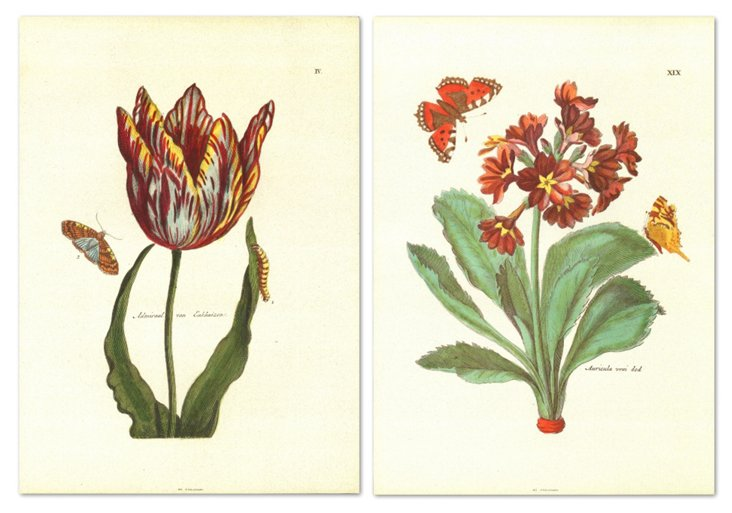 Nicolas Robert, Floral II, Set of Two