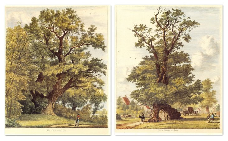 Jacob G. Strutt, Trees I, Set of Two
