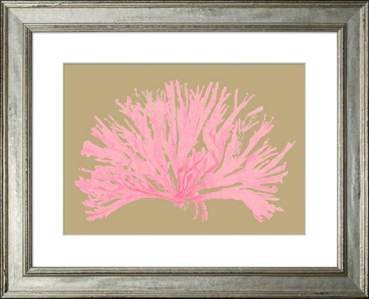 Miranda Coral, Pink