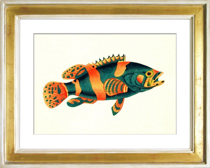 Exotic Fish II