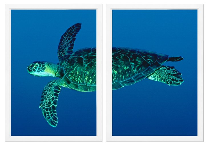 Sea Turtle Diptych