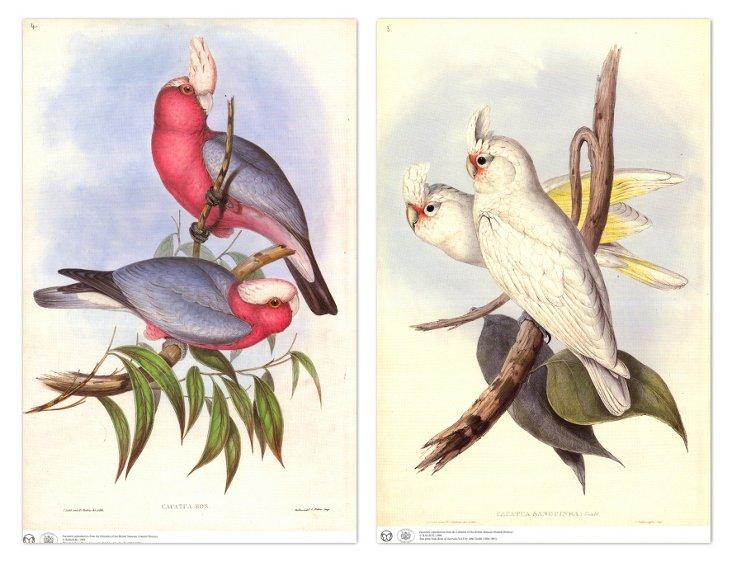 John Gould, Parrots VI 1865