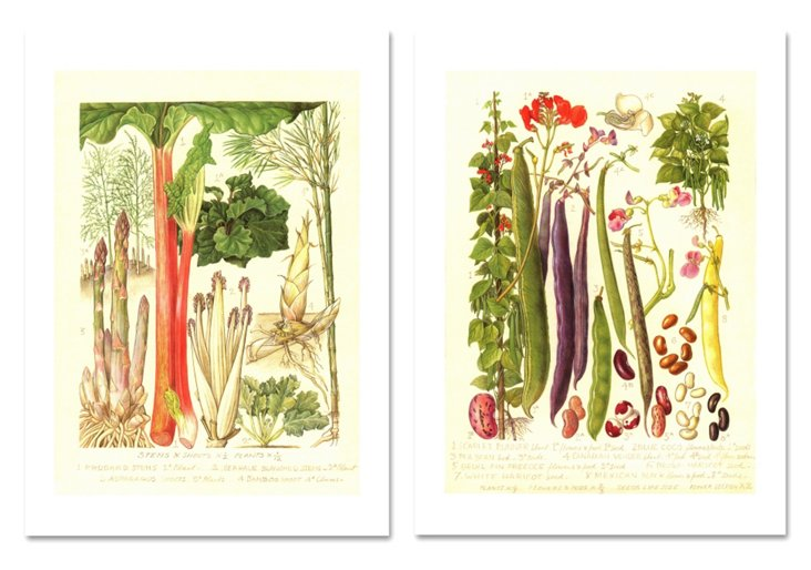 Rhubarb & Asparagus