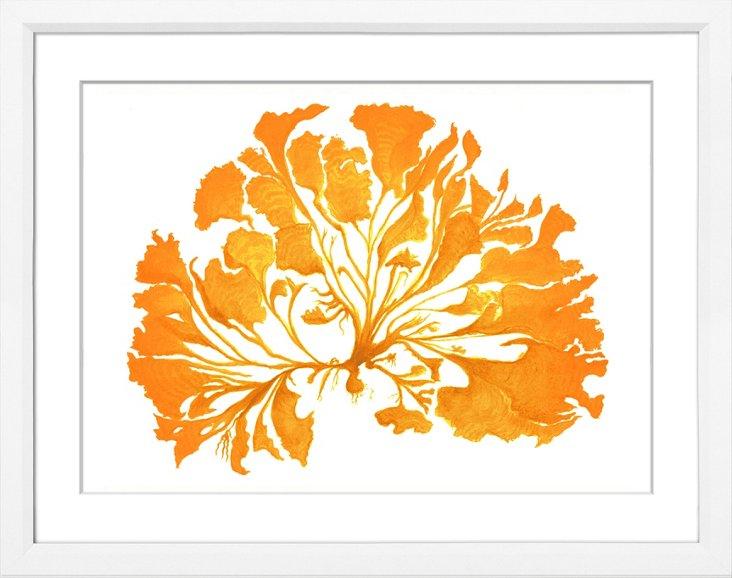Miranda Baker, Orange Coral I