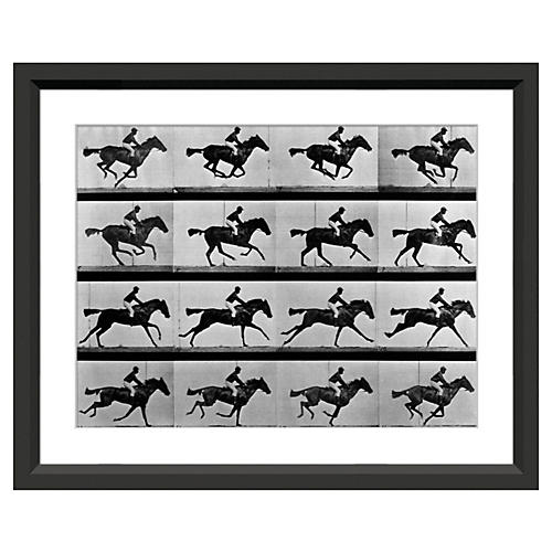 Eadweard Muybridge, In Motion