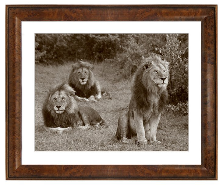 Kings of the Savannah