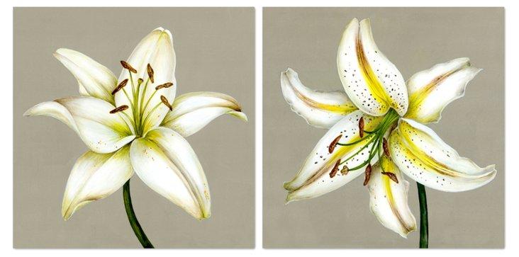 Kelly Cutter, Lilies