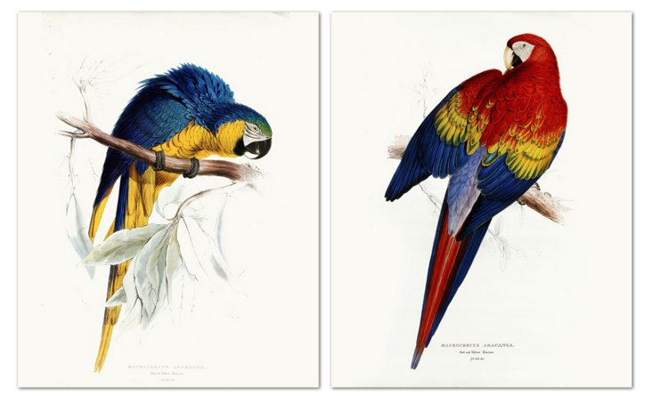 Macaw's Diptych