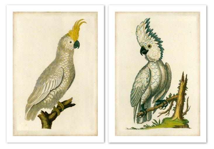 Cockatoo I and II, 1820 Diptych