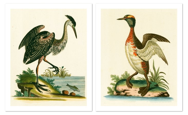 Heron and Grebe Diptych, 1750