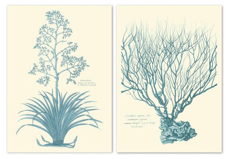 Pierre Joseph Buchoz, Euphorbia