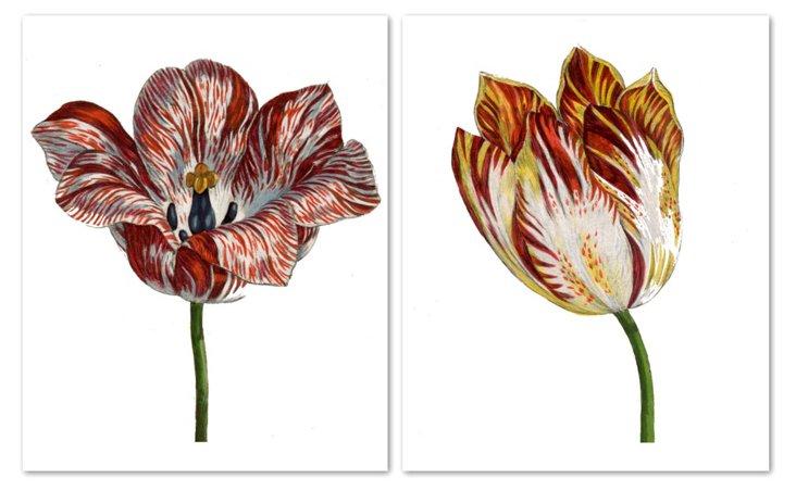 Hortus Tulips II
