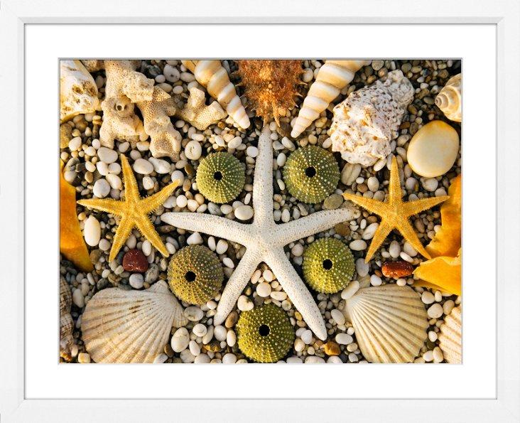 Decorative Seabed