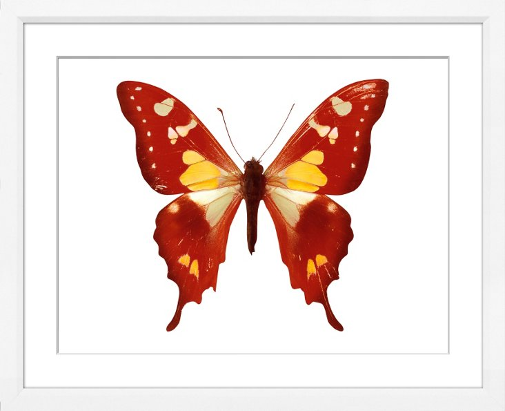 Red Pointed Butterfly