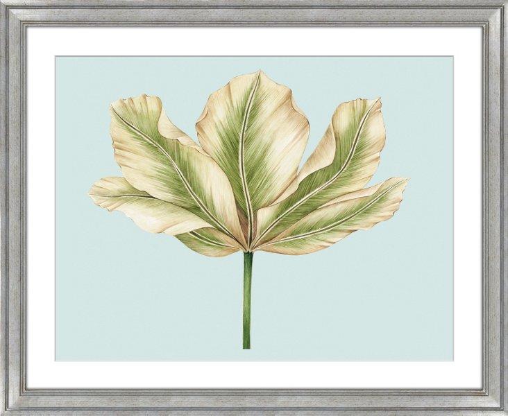 Kelly Cutter Tulips II