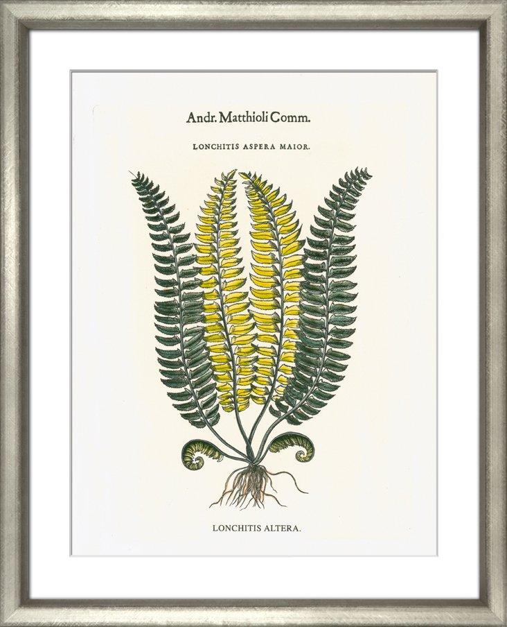 Matthioli Ferns I